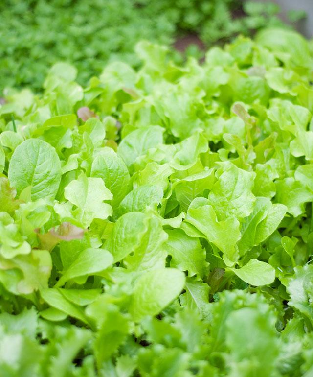 greens-1