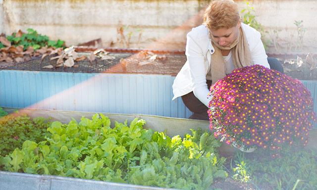 green-salads-garden-1