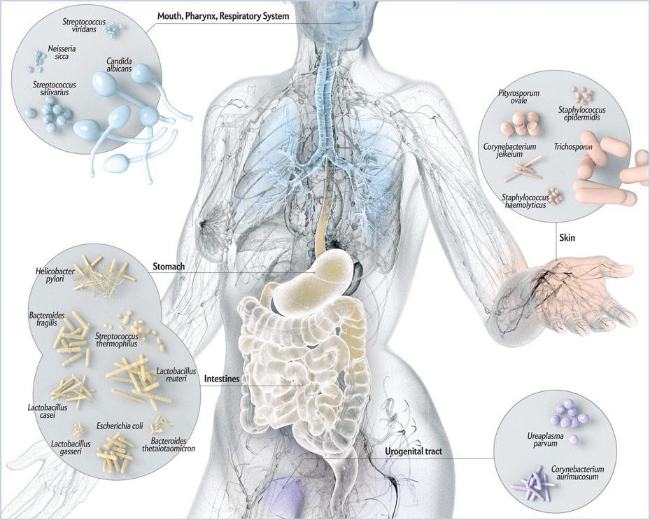 Човешкият микробиом е колекция от всички гени, съдържащи се в микробиотата